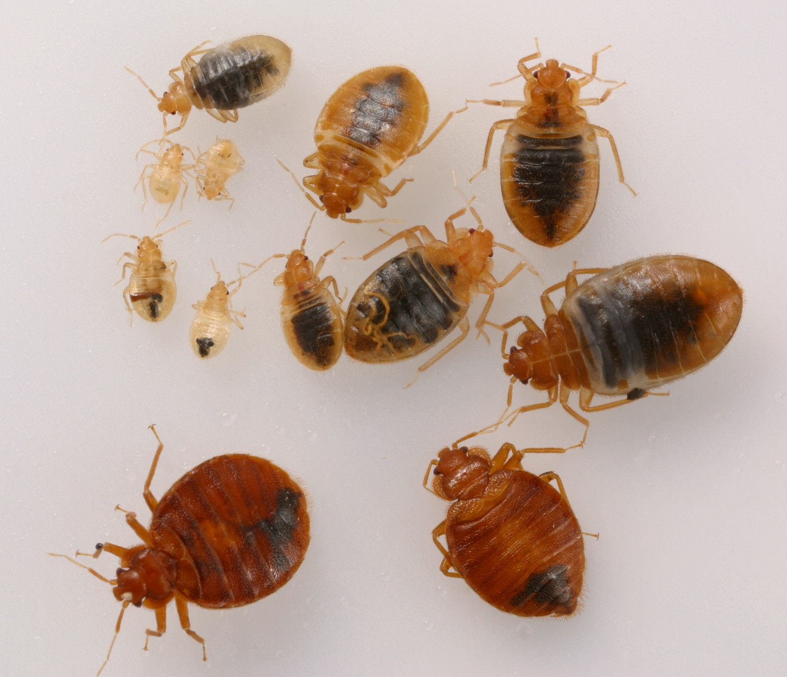 Apartment Building Has Bed Bugs california multi-unit housing managers answer bedbug survey